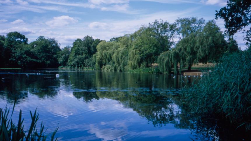 Priory Park, Reigate. Provia 100